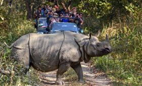Jungle Safari in Chitwan National Park Cost, Itinerary, Details, Time, Entry Fee