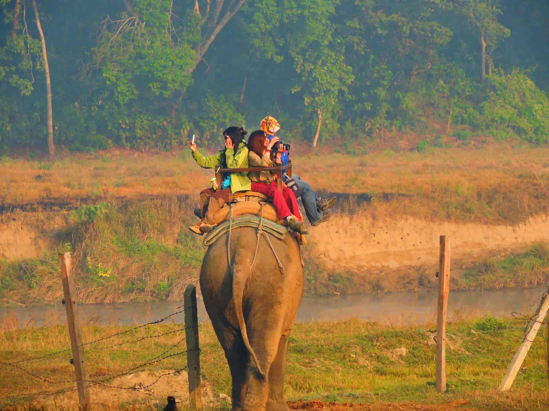 Elephant Safari in Chitwan
