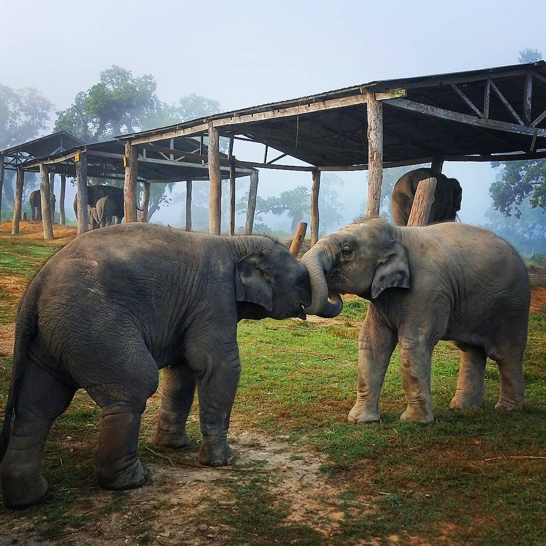 Elephant Breeding Center Chitwan