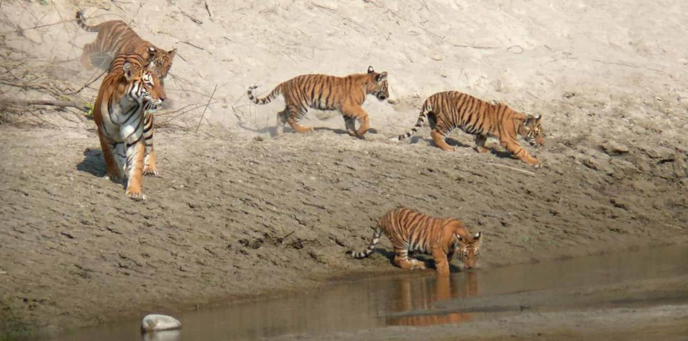 Tiger Tracking Tour Bardia